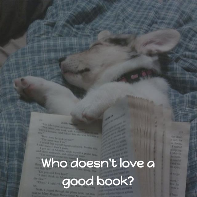 Cute Puppy Meme: Who doesn't love a good book?
