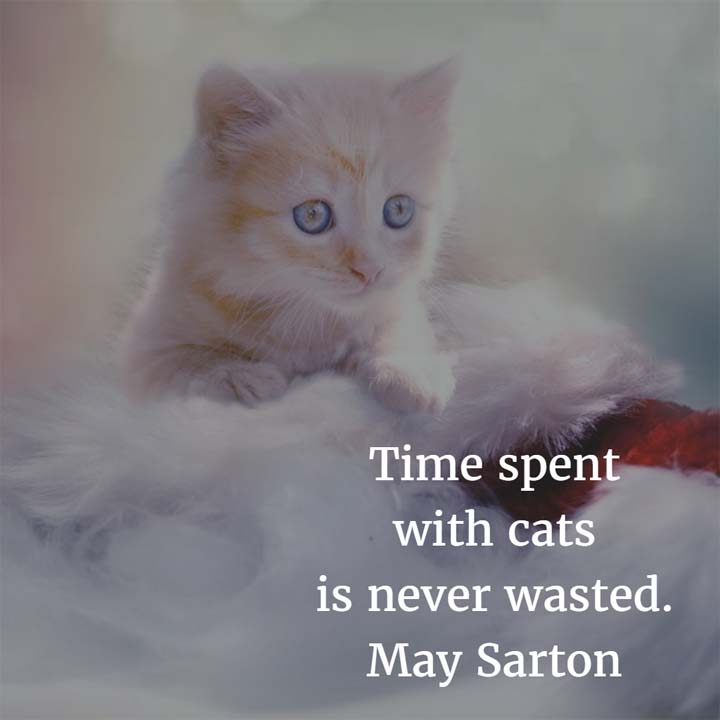 May Sarton on Cats: Time spent with cats is never wasted.