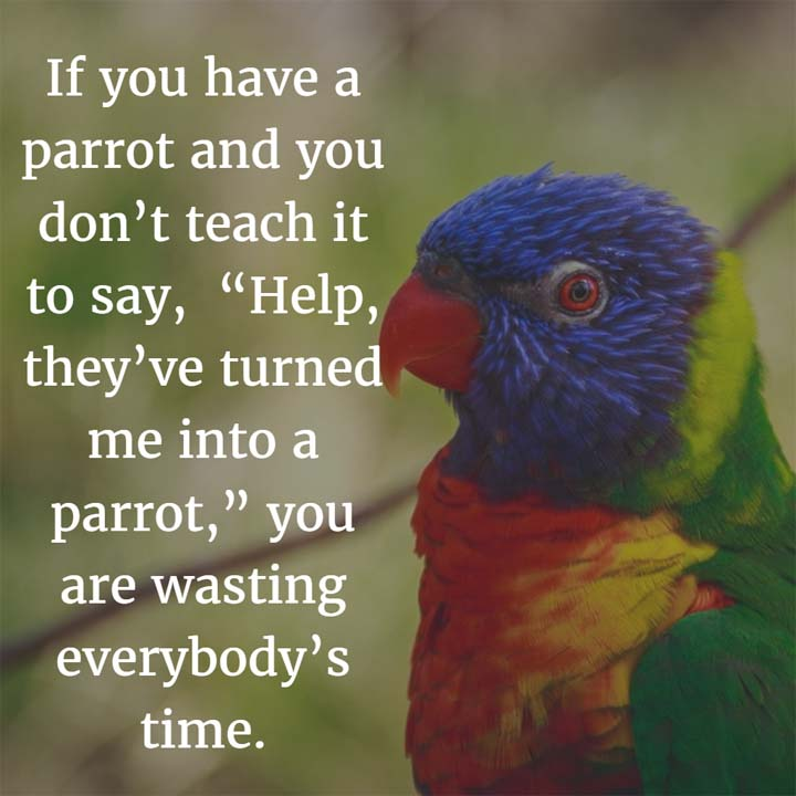 "Funny Parrot Image: If you have a parrot and you don't teach it to say, ""Help, they've turned me into a parrot,"" you are wasting everybody's time."