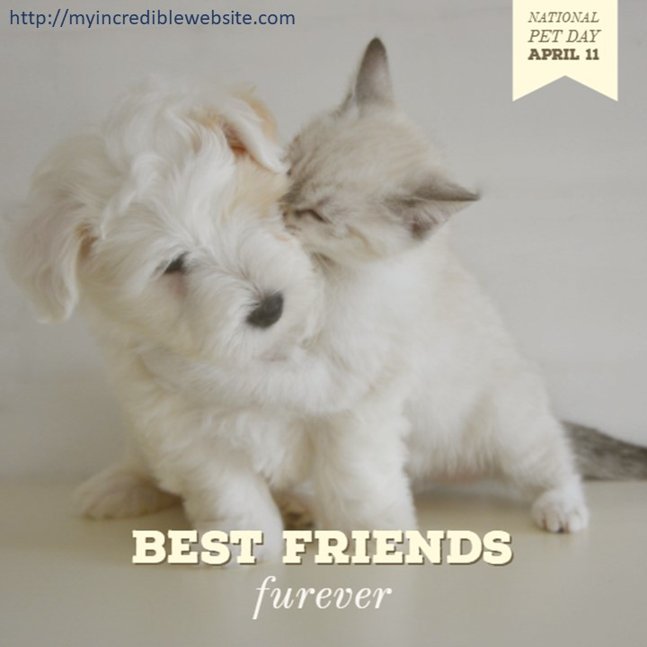 National Pet Day: Check out these Best Friends Furever while you celebrate National Pet Day on April 11th, 2018. I love cats. I love dogs. Most people do.