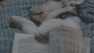 Cute Puppy Meme: Love a good book!
