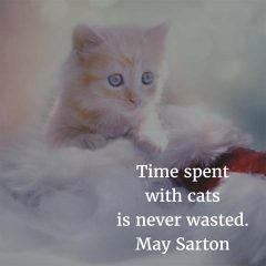 May Sarton on Cats