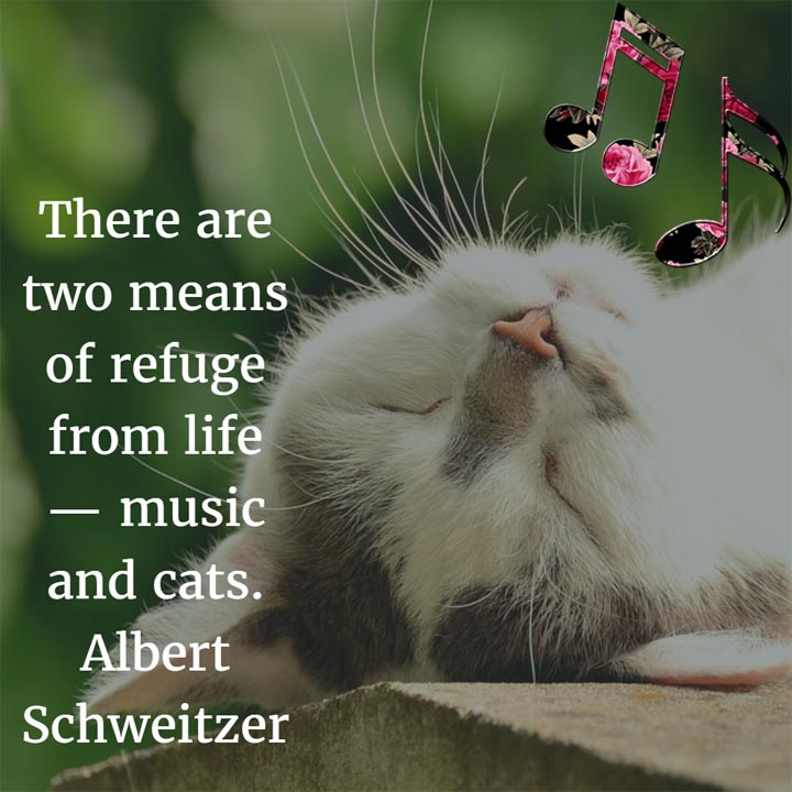 There are two means of refuge from life — music and cats. — Albert Schweitzer