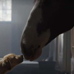 Puppy Love Budweiser Superbowl commercial