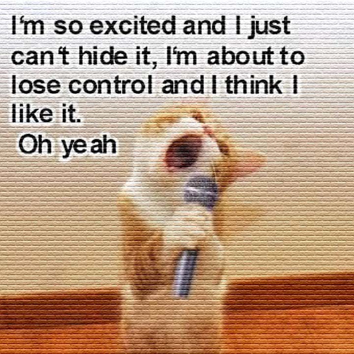 Singing Cat Meme - This cat is funny as it sings: I'm so excited and I just can't hide it. I'm about to lose control, and I think I like it. Oh yeah! #funny #cat