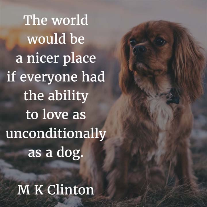M K Clinton on the Love of Dogs: The world would be a nicer place if everyone had the ability to love as unconditionally as a dog. — M K Clinton, blogger, Barking from the Bayou
