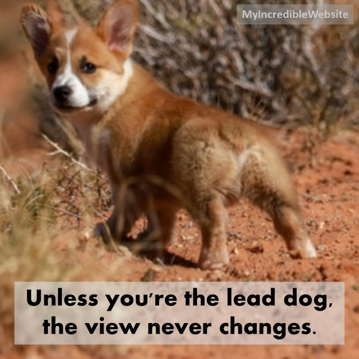 Dog Meme: Unless you're the lead dog, the view never changes. #dogs #puppies #dogmeme