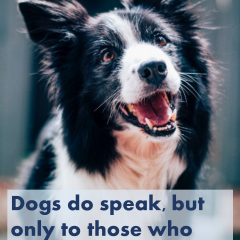 Dogs do speak, but only to those who know how to listen. — Orhan Pamuk #dogs #puppies #doglove