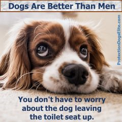 Dogs Are Better Than Men: Toilet Seats