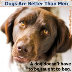 Dogs Are Better Than Men - Begging