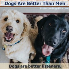 Dogs Are Better Than Men - Better Listeners