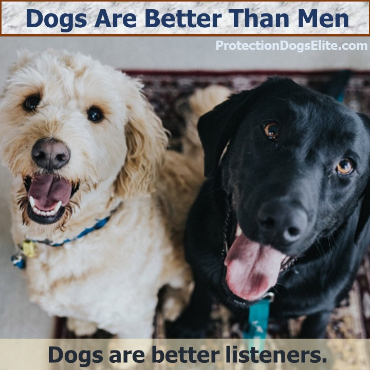 Dogs are better than men: Dogs are better listeners. I Love Dogs!