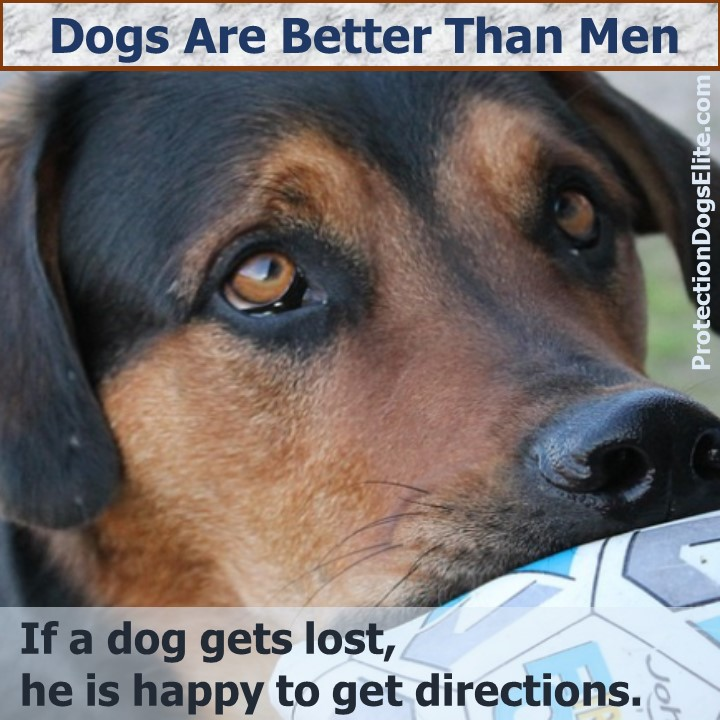 Dogs are better than men: If a dog gets lost, he is happy to get directions. I Love Dogs!