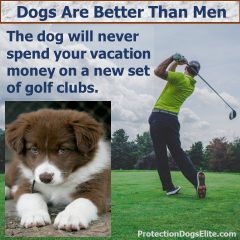 Dogs Are Better Than Men: Golfing