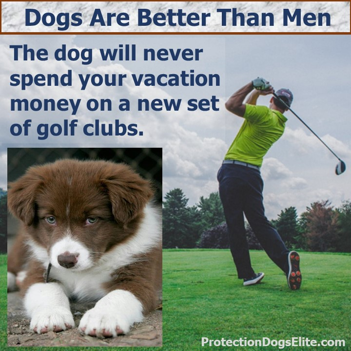 Dogs are better than men: The dog will never spend your vacation money on a new set of golf clubs. I Love Dogs!