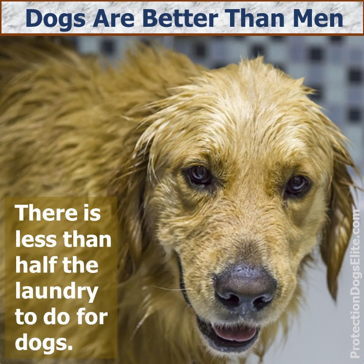 Dogs are better than men: There is less than half the laundry to do for dogs. I Love Dogs!