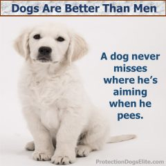 Dogs Are Better Than Men - Peeing
