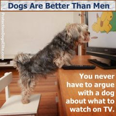 Dogs Are Better Than Men - Watching TV