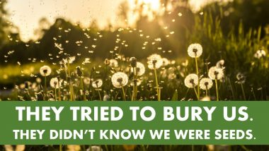 They Tried to Bury Us. They didn't know we were seeds.