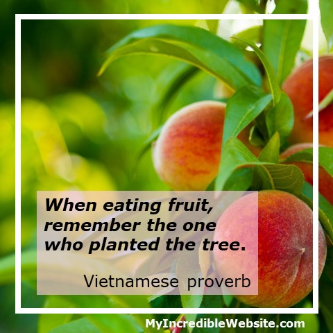 When eating fruit, remember the one who planted the tree. — Vietnamese proverb