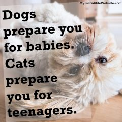 Dogs Prepare You For Babies, Cats Prepare You For Teenagers
