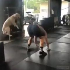 Exercising with Dogs: Dog and Man Exercising Together