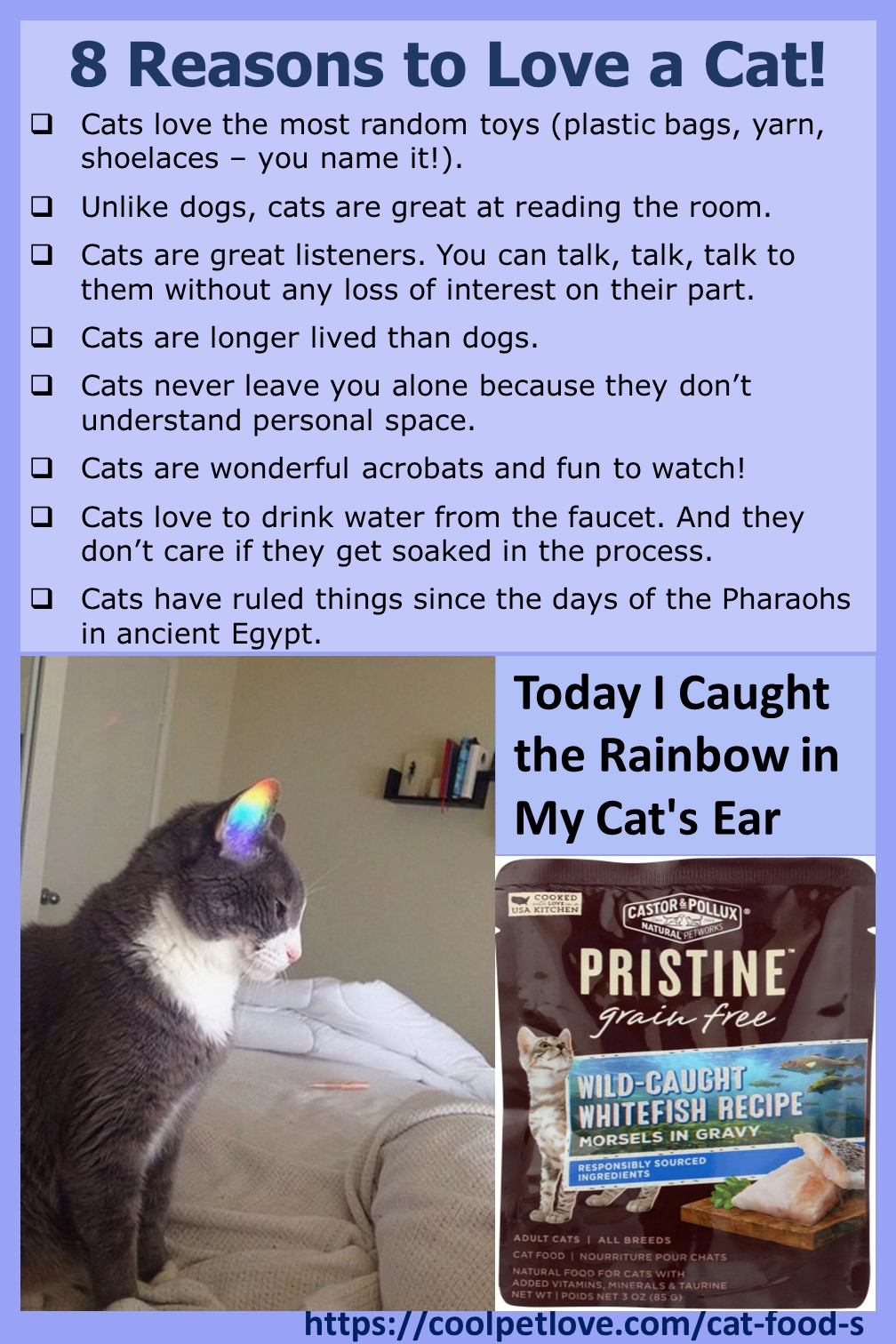 Today I caught a rainbow in my cat's ear #CatLove